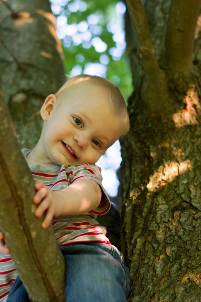 Milo in a tree